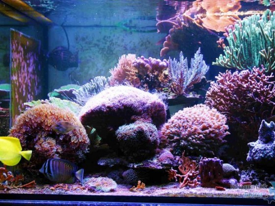 Aquarium 0816.JPG