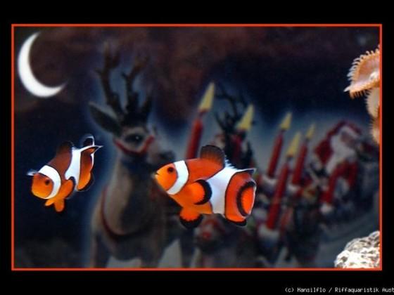 Chlownfisch hilft dem Weihnachtsmann