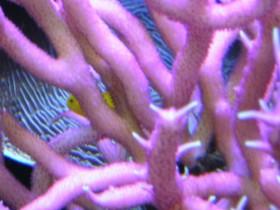 Korallen 2