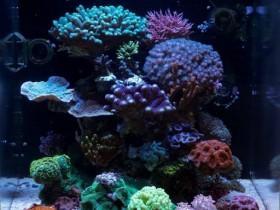 Aquarium Award 2016