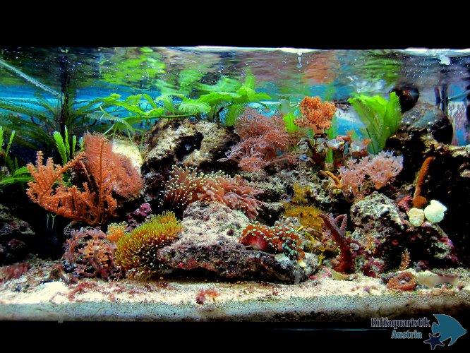 Aquarium 27 Liter Mai 2014 - 1