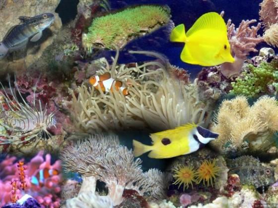 Anderas Aquarium Collage
