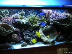 Mein Aqua