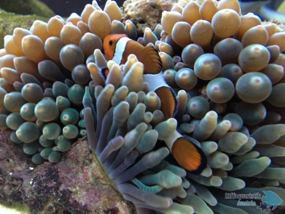 Leben im Eheim Scubaline 460 marine
