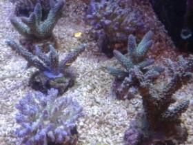 Lieferung Celebes ( Stein..und weichkorallen und Fische)