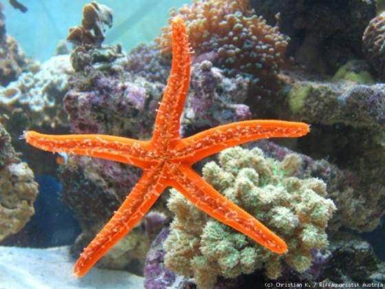 Patrick, Freund von Spongebob