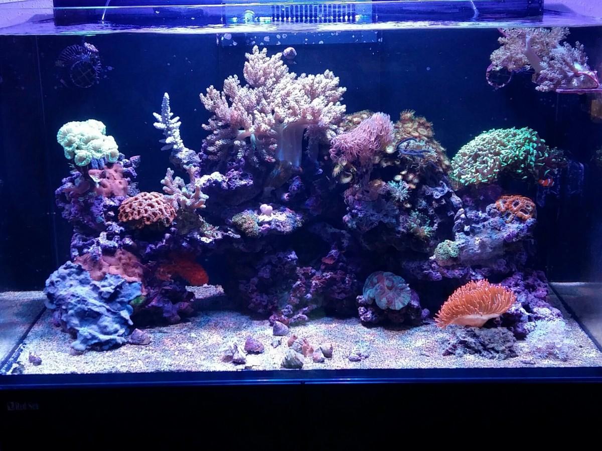 Mein 250er Reefer
