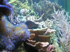 Korallen 1